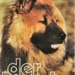 Die erste Eurasier- Post aus dem Jahre 1980 mit Ares vom Freesenberg auf der Titelseite