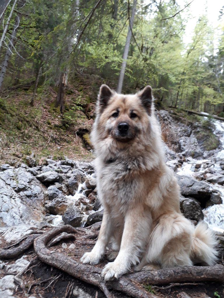 Tatra von der Pferdekoppel